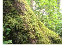 o_tree2